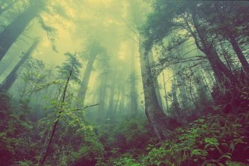 Trees Have Powerful Needs & Wants: The Hidden Life of Trees