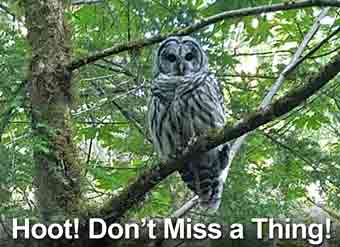 Hoot! Don't Miss a Thing!